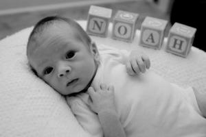 Noah - Photo by Cicely Berkey