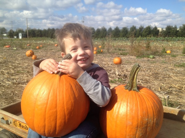 pumpkin patch - noah